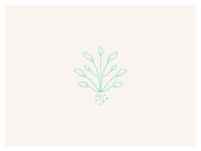 Coleoptera - Foliage