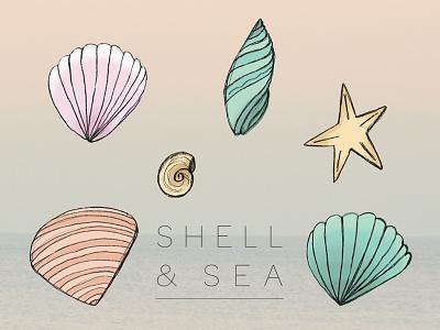 Shell&sea illustration beach sea shell