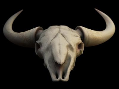 Skull Test skull ben christie 3d vray model zbrush bone