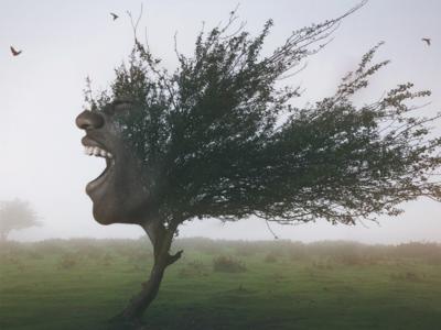 Afro tree