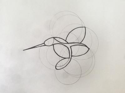 quick sketch sketch idea kolibrie