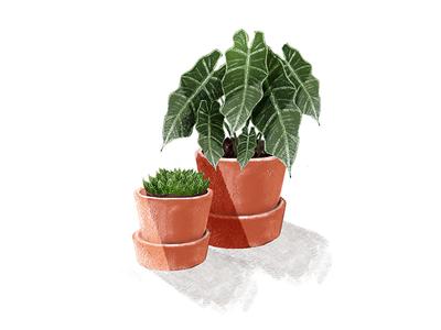 Plants illustration kyles brushes photoshop cactus orange urban jungle green plant
