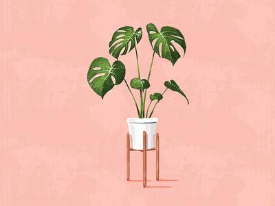Monstera plants green decor home leaves plant monstera