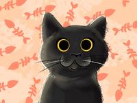 Coco the Kitten