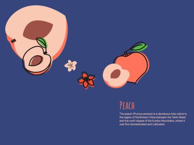 Peach peach fruit illustration