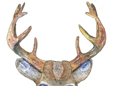 Deer hydrangea daisy painting traditional watercolor animal fauna flowers flora antlers illustration deer