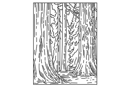 Groves of Redwoods in Sequoia National Park Mono Line Art scenery