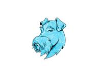 Bingley Terrier Head Drawing