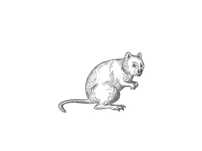 Quokka Drawing Black and White