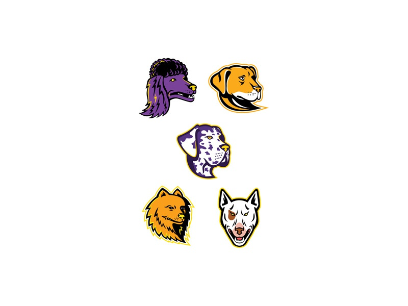 Dog Heads Mascot Collection retro icon head animal pit bull pitbull terrier pet toy poodle miniature poodle retriever-gun dog spitz type bull terrier labrador retriever great dane pomeranian poodle dog canine mascot