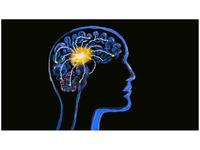 Human Brain Neuron Activity Watercolor 2D Animation