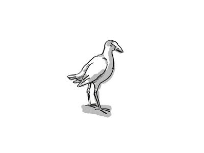 pukeko New Zealand Bird Cartoon Retro Drawing