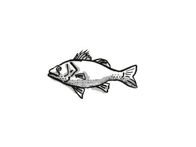 Australian Bass Fish Cartoon Retro Drawing