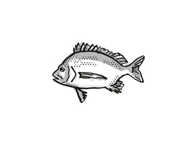 Pikey Bream Australian Fish Cartoon Retro Drawing