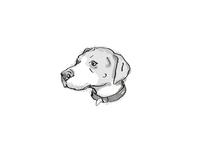 English Foxhound Dog Breed Cartoon Retro Drawing