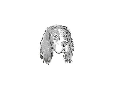 English Setter Dog Breed Cartoon Retro Drawing