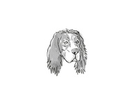 English Setter Dog Breed Cartoon Retro Drawing