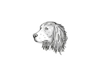 English Springer Spaniel Dog Breed Cartoon Retro Drawing