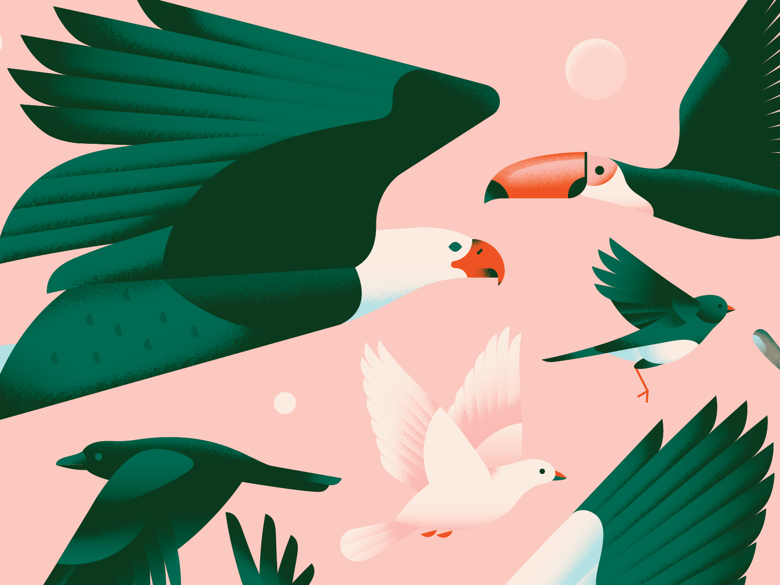 Birds dove bright collage pattern wings flying crow toucan birds bird pigeon eagle animal pastel texture gradient flat vector illustration