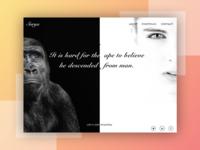 Ape VS Human