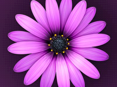 Textmate 2 icon illustration african daisy flower textmate