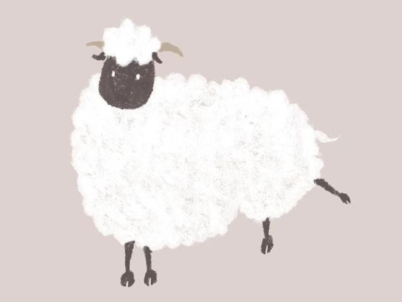 sheep illustration animal white sheep