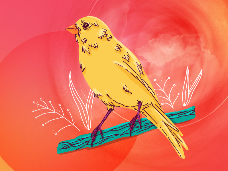 Canary canary free as bird freedom bird texture abstract photoshop illustration