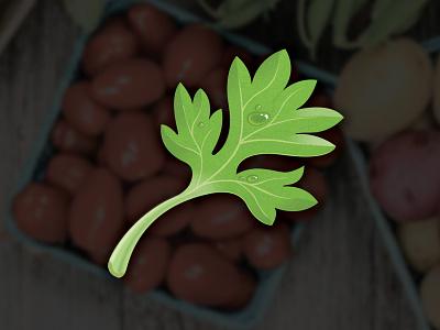 Parsley Icon parsley icon