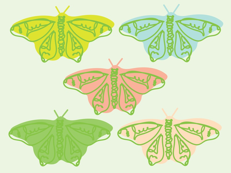 Life Cycle metamorphosis life cycle of life cycle caterpillar cocoon butterfly butterflies life cycle graphic design design illo illustrator illustration drawing