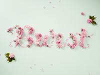 Burst Into Bloom Flower Type