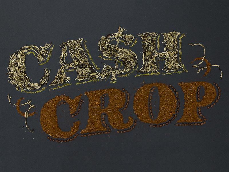 Conde nast cash crops dribbble