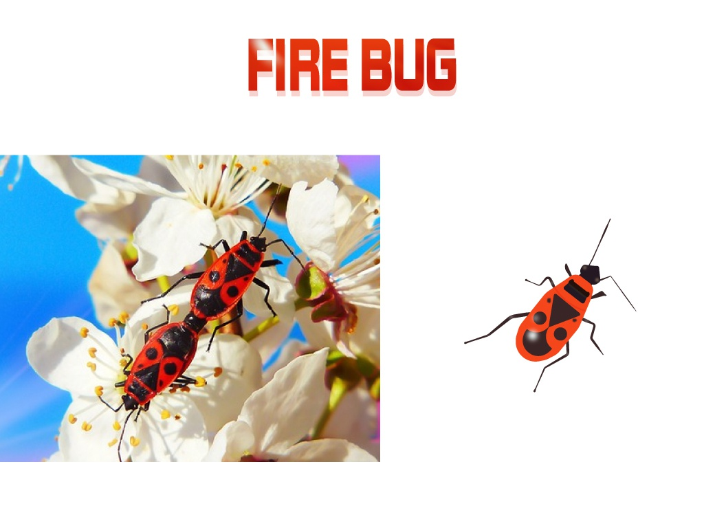 Fire Bug design april icon discover art nature insect fire bug