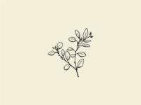 Illustration | seeded eucalyptus