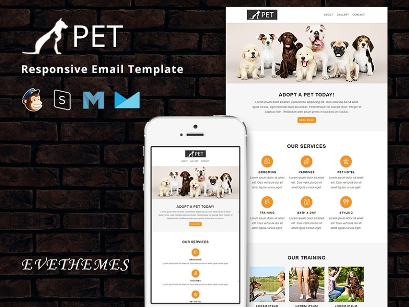 Pet - Responsive Email Template welfare veterinary pet training simple saloon promotion pet sitter pet shop pet care grooming dog club clinic newsletter email template