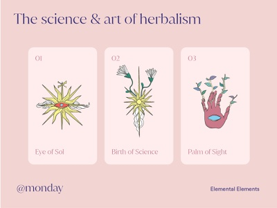 Monday - Botanic Brand Identity women card featured medical packaging product page flowers plants pink color graphic identity branding illustration