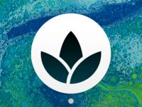 Blossom app icon