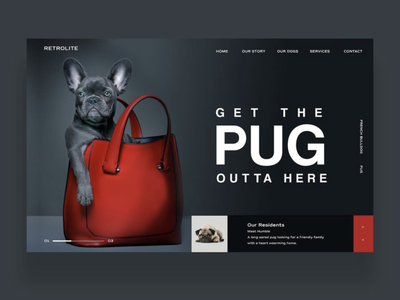 Get The Pug Outta Here Ui Design french bulldog pug puppy dog uiux design inspiration ux ui photography graphic design ux design ui design web design
