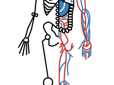 Human Body Examination illustration human body organs heart bones skull lungs veins blood