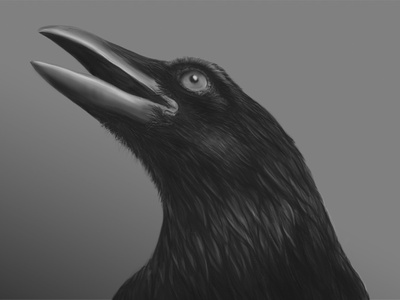 Cuervo drawing sketch wacom wildlife digital art