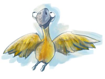 Parrot parrot bird illustration practise
