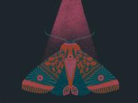 Sp00ky Moth