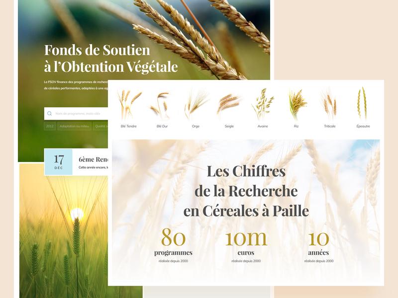 Agronomic Research Website wheat green agricultural agriculture natural nature website food cereals cereal organics organic biege pastel