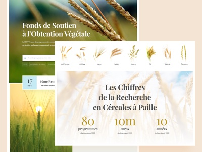 Agronomic Research Website wheat green agricultural agriculture natural nature website food cereals cereal organics organic biege pastel