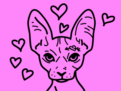 drawing hearts sphinx cat