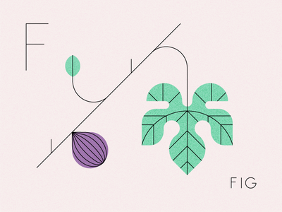 Fig nature produce tree fruit summer los angeles typography design visual design ui illustration fig