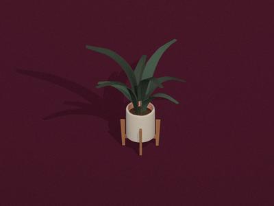 Plant | Sketchbook