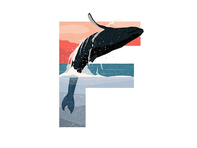 F is for Fin Whale