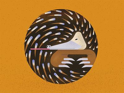 Echidna (letter O) australia 36 days of type animal flat letter typogaphy 36daysoftype design character vector illustration