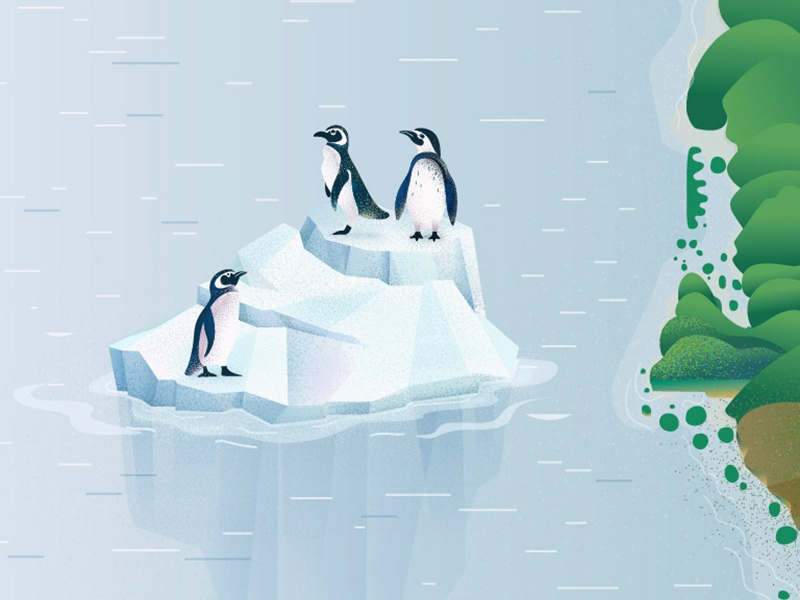 Pinguin isle vector iceberg ocean art design character illustration penguin