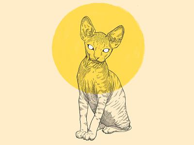 Lillith artwork hand drawn illustration antichrist demonic sphynx cat procreate ipad pro pen and ink etching